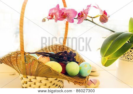 Easter eggs in a basket,  flowering Orchid