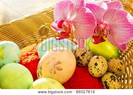 Easter and quail eggs in a basket, Orchid, morning