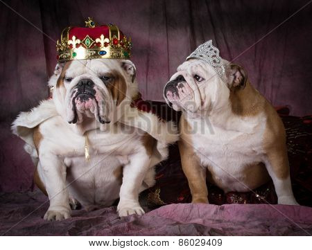 royal couple - two english bulldogs dressed up like a king and queen
