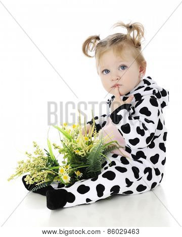 An adorable baby girl with a lap full of wild flowers, thinking in her cow costume.  On a white background.