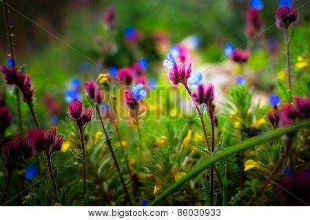 Beautiful Small Flowers Growing In A Meadow In Spring