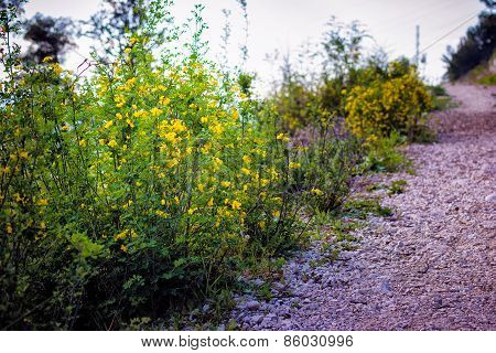 Small yellow flowers and green bushes growing in a meadow in spring