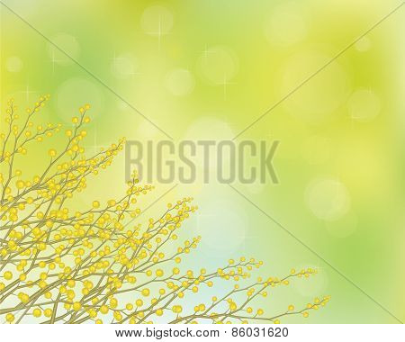 Vector mimosa flowers on spring background.