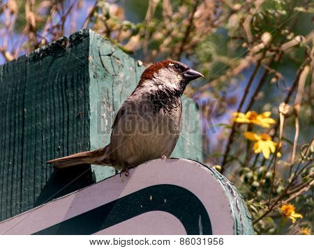 A Sparrow Is Looking