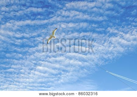 seagull and airplan