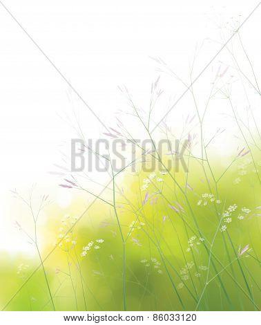 Vector wildflowers background.