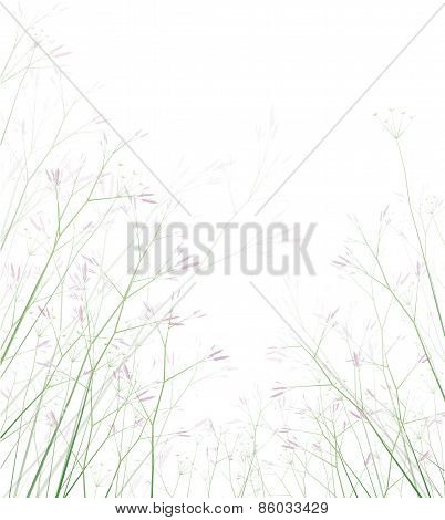 Vector wildflowers isolated.