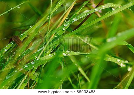 Droplets of dew on the grass