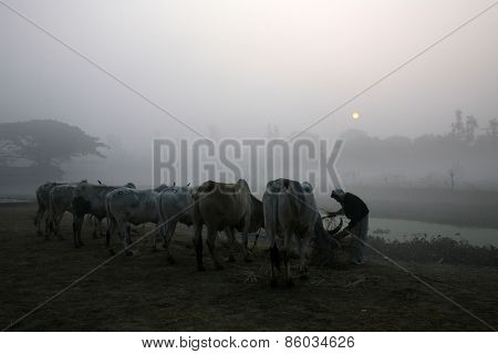 Misty morning in the Bengal countryside Kumrokhali
