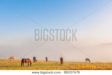 Horses in a morning mist