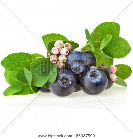 Fresh  blueberries berries close up with flowers isolated