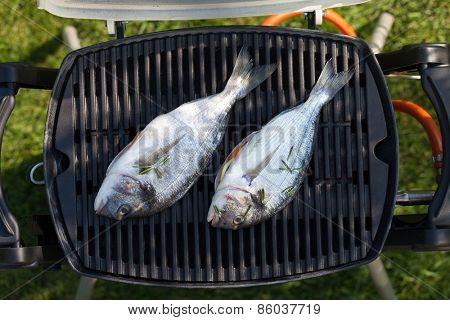 Fresh dorado fish grill cooking outdoors