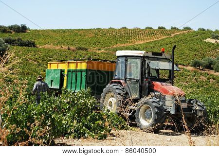 Tractor in vineyard, Montilla.