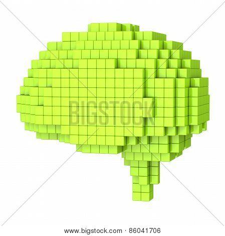 Voxel human brain