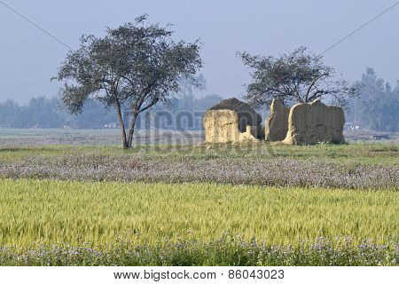 broken tharu house and fields in Terai, Bardia, Nepal