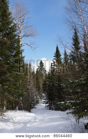 Trail And Tall Trees