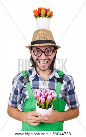 Young funny gardener with tulips isolated oin white