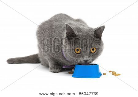 Cat With Yellow Eyes Eating Food From A Bowl On A White Background