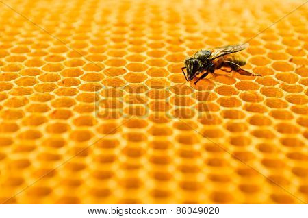 Bees Honey Cells