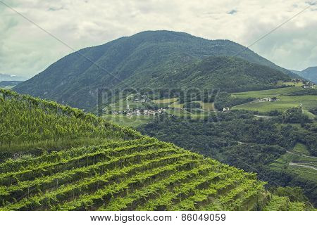 views of the Alps and the vineyards in Italy