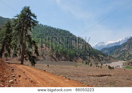 Lonely Pine Tree Leaning Over Rocky Roads In Turkey