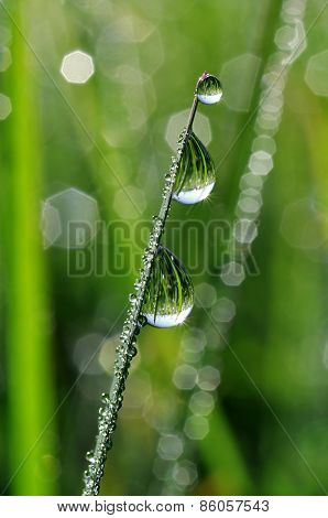 Fresh green grass with dew drops closeup