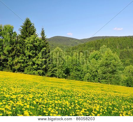 Spring landscape in the national park Sumava