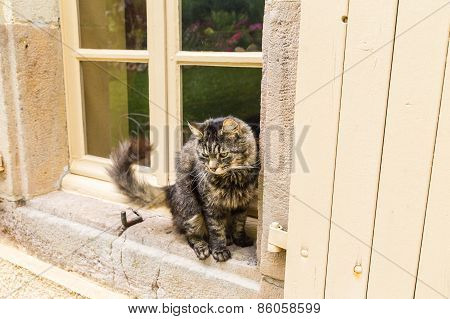 Tortoiseshell Cat Sitting On The Window Sill Of An Old Stone Hou