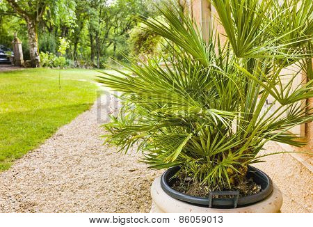 Palm In Pot Outside Old Stone House In The South Of France