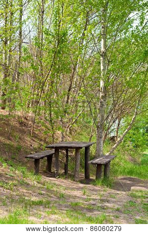 Wooden Table In Birch Grove