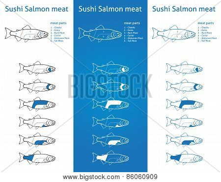 Sushi Salmon Meat Diagram