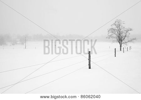 Fence Leading to Tree on Snowy Day