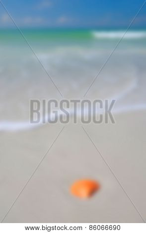 Background Image Of A Seashell On The Beach