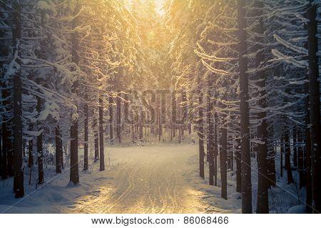 Forest Ski-track