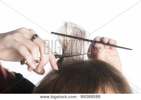 Hairdresser Hands Cutting Hair of a Customer