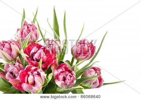 Big Beautiful Bouquet Of Red Tulips