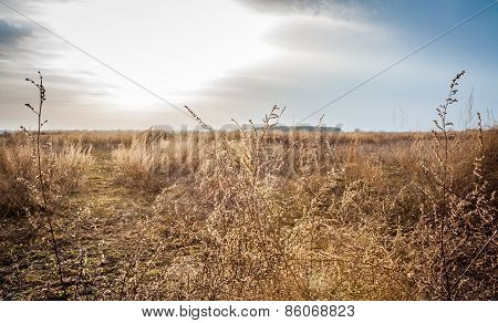 Dried field in a sunny spring day