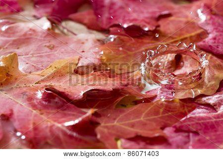 Autumn Leaf With Water Splash