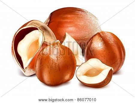 Hazelnuts with leaves. vector illustration