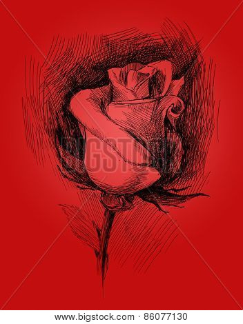 flower sketch on red