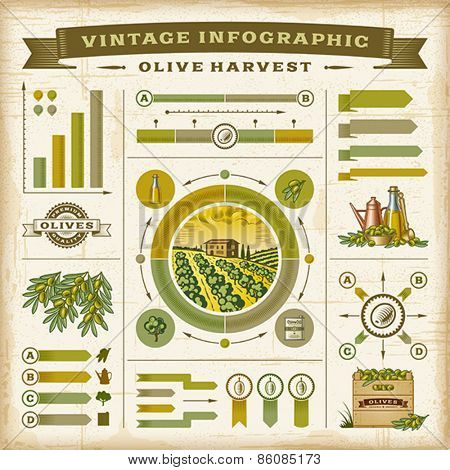 Vintage olive harvest infographic set. Editable EPS10 vector illustration with clipping mask.