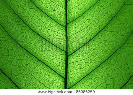 Green Leaf cell structure background - macro shot, texture