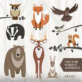 pic of wild-rabbit  - Set of vector illustrated forest animals on light woodland background made of trees - JPG