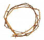 foto of crown-of-thorns  - Crown of thorns - JPG