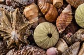 image of kindness  - Different kinds of seashells all mixed together - JPG