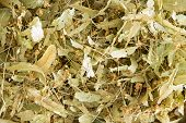 picture of linden-tree  - Dried linden flowers a flower from the linden tree Tilia used in herbalism and alternative medicine to produce a tisane or tincture rich in antioxidants anti - JPG