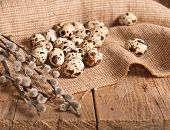 picture of pussy-willows  - Many Quail eggs and pussy - JPG