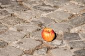 stock photo of paving stone  - Withered apple on grunge street stone paving - JPG