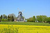 pic of rape  - Windmill behind bright yellow rape in north germany - JPG