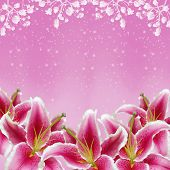 picture of easter lily  - Beautiful lily flowers background on pink  - JPG